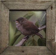 8 x 8 Baby Wren Metallic Finish Canvas Rustic Wood Frame
