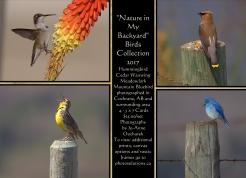 Bird Collection 4 - Card Set $25.00