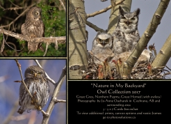 Owl Collection 3 - Card Set $20.00