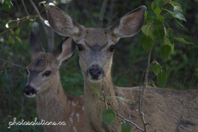 deer-mom-and-fawn-wm