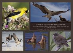 Backyard Birds - 5 Card Set $35.00/set