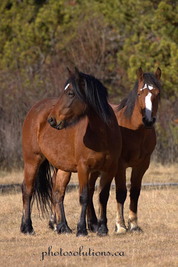 wild-horse-duo-wm
