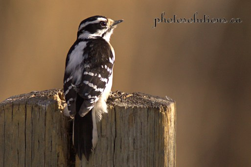 woodpecker-weaselhead-feb-cropped-wm