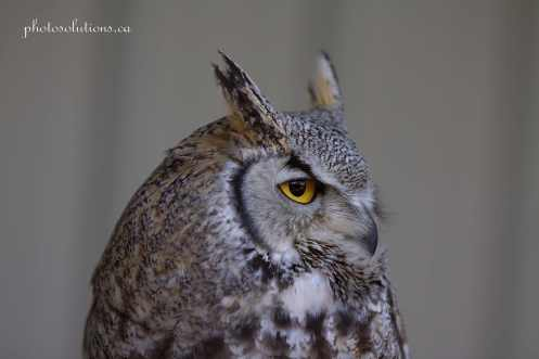 Great horned side profile BOP