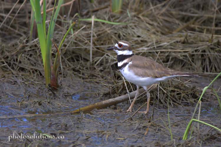 Killdeer Riviera pond leaving the pond