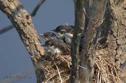 Babies Sleeping cropped wm