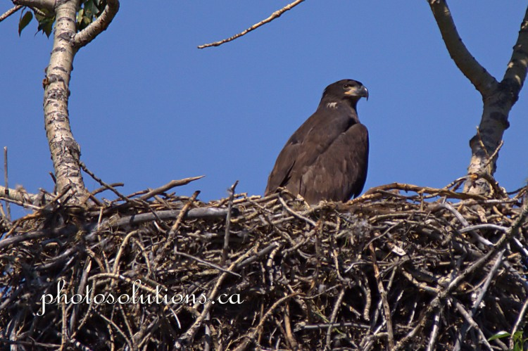 Eagle cropped wmt