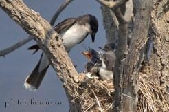 Feeding time 2 cropped wm