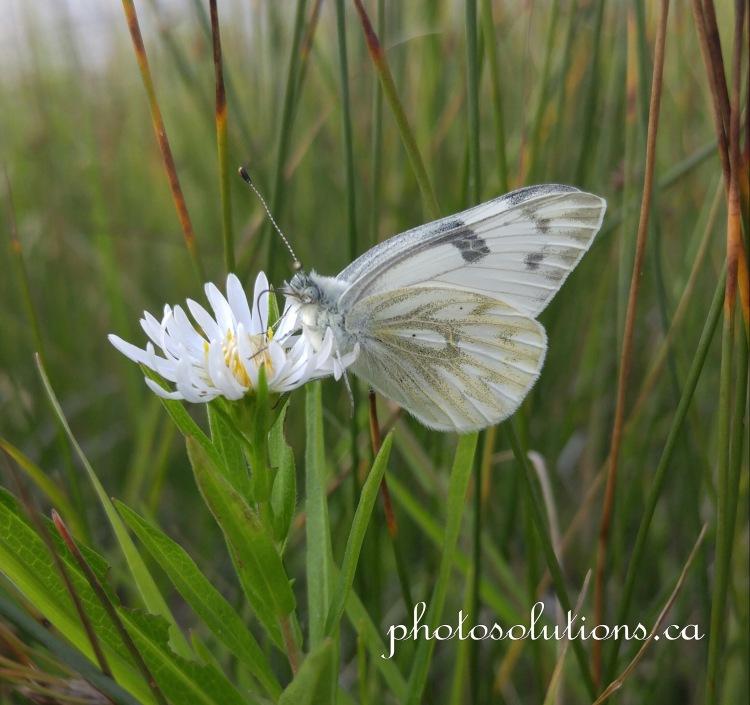 Butterfly brunch