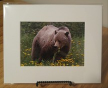 Grizzly 5 x 7