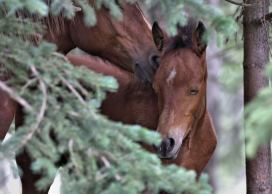 Wild Horses - Mothers Touch ws